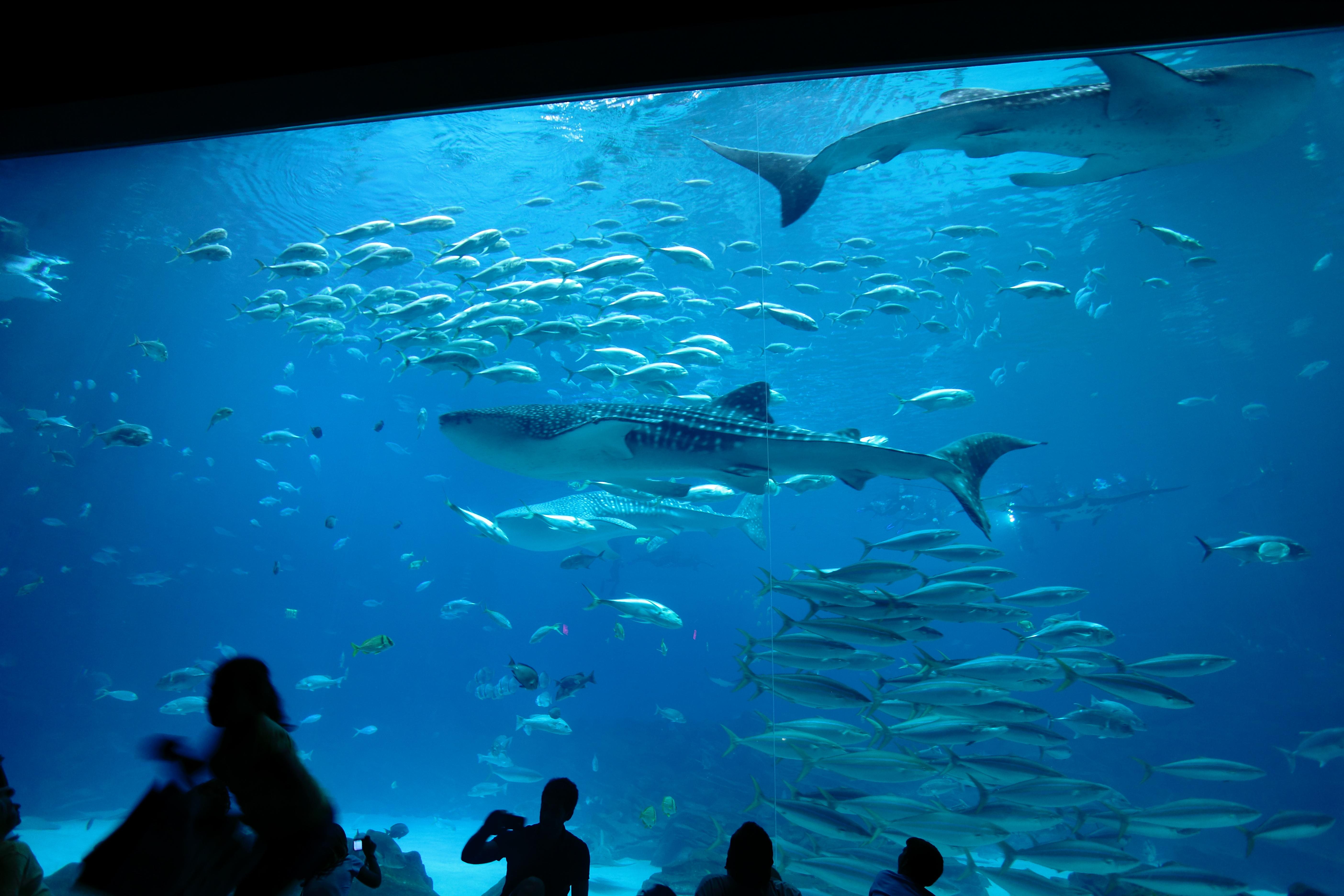 Visite au sein du Georgia Aquarium